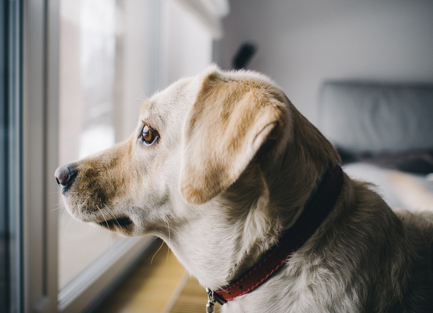 Choosing the right home security system when you have pets